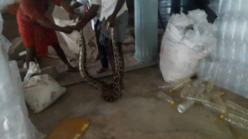 Python in Chittoor Ganga Temple