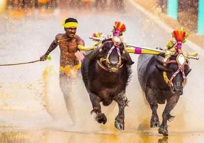 Srinivasa gowda running trials