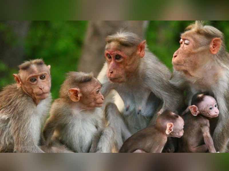 Monkey fever karnataka
