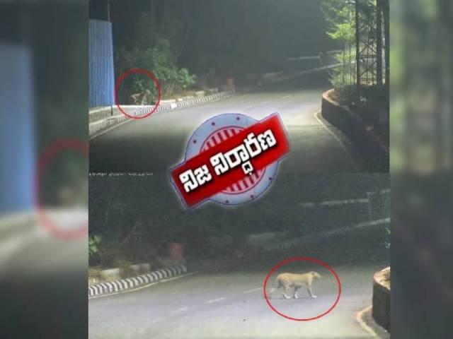 హైదరాబాద్లో చిరుత సంచరిస్తోందా ?