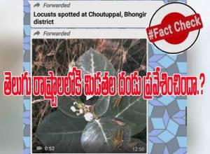 Fact Check : తెలంగాణ-ఆంధ్రప్రదేశ్ రాష్ట్రాల్లోకి మిడుతలు ప్రవేశించాయా..?