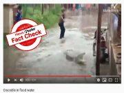 Fact Check : హైదరాబాద్ లో జనావాసాల్లోకి మొసలి వచ్చిందంటూ వైరల్ అవుతున్న పోస్టులు..!
