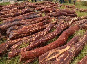 చిత్తూరు: అటవీ ప్రాంతంలో టాస్క్ఫోర్స్ కూంబింగ్.. ఎర్రచందనం దుంగలు పట్టివేత